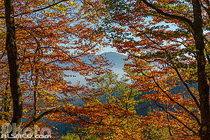 Forêt en automne et vue sur le Grand Ballon, Storckensohn, Parc naturel régional des Ballons des Vosges, Haut-Rhin (68), Alsace, France