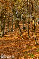 Sentier des Roches en automne, Stosswihr, Haut-Rhin (68), Alsace, France