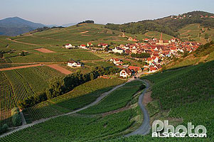 Photo : Vignoble et village de Niedermorschwihr, Haut-Rhin (68), Alsace, France