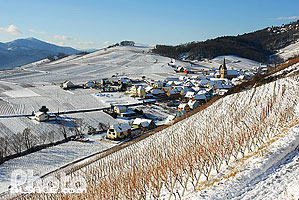 Photo : Vignoble et village de Niedermorschwihr, Haut-Rhin (68)