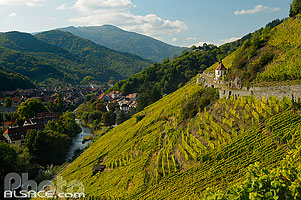 Photo : Vignoble de Rangen (Grand Cru), Thann, Haut-Rhin (68), Alsace, France