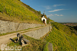 Photo : Vignoble de Rangen (Grand Cru), Thann, Haut-Rhin (68)