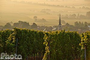 Photo : Vignoble Kugelberg et village de Rorschwihr, Haut-Rhin (68)