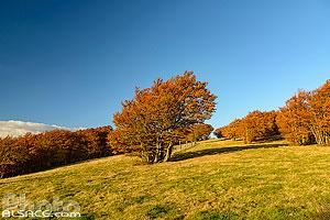 Chaume du Rouge Gazon en automne, Saint-Maurice-sur-Moselle, Vosges (88), Lorraine, France