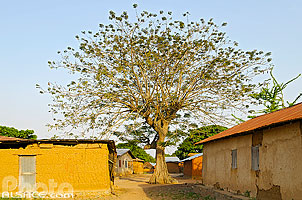 Photo : Village de Camaté-Shakaloké, Dassa, Collines, Bénin