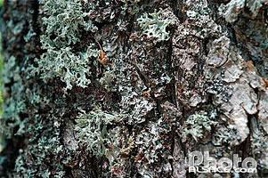 Photo : Ecorce et lichen, Bas-Rhin (67)