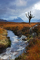 Photo : Ruisseau et arbre mort, Rannoch Moor, Highlands, Scotland, United Kingdom