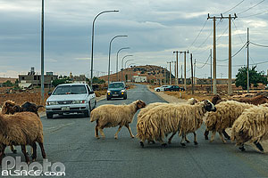 Photo : Troupeau de mouton sur la route du Roi (King's Highway), Tafilah, Jordanie
