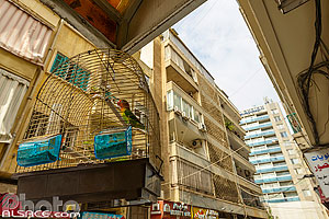 Photo : Perroquet dans une cage, Rue Antoun Gemayel, Ras Beyrouth, Beyrouth, Liban