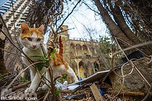 Chat devant le Qasr Ziadé dans le quartier de Zokak El-Blat, Beyrouth, Liban, Beyrouth, Liban