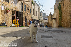 Photo : Chat dans une rue de Tripoli, Liban-Nord, Liban