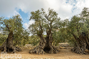 Photos de Bchaaleh en Liban-Nord, Liban