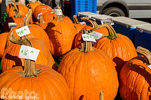Photo : Thanksgiving Pumpkins (Jack-o-lantern pumpkins) sur un marché de Brooklyn, New York, Etats-Unis, New York, Etats-Unis