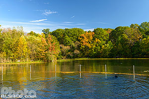 Photo : Prospect Park Dog Beach, Prospect Park, Brooklyn, New York, Etats-Unis