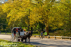 Photo : East Drive dans Central Park, Manhattan, New York, Etats-Unis
