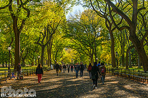 The Mall and Literary Walk au début de l'automne, Central Park, Manhattan, New York, Etats-Unis