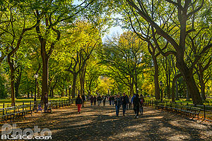 Photo : The Mall and Literary Walk au début de l'automne, Central Park, Manhattan, New York, Etats-Unis, New York, Etats-Unis
