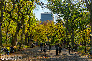 Photo : The Mall and Literary Walk au début de l'automne, Central Park, Manhattan, New York, Etats-Unis