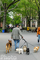 Photo : Dog sitter, Washington Square Park, West Village, Manhattan, New York, Etats-Unis