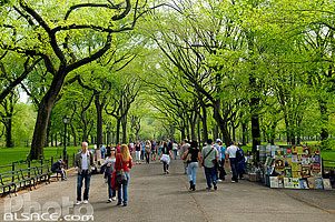 Photo : The Mall and Literary Walk, Central Park, Manhattan, New York, Etats-Unis