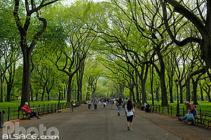 Photo : The Mall and Literary Walk, Central Park, Manhattan, New York, Etats-Unis, New York, Etats-Unis